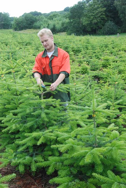 PRODUCTION – Fionia Christmas Trees