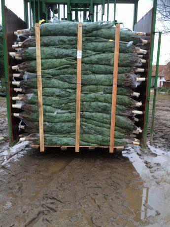 Juletræer på palle 1